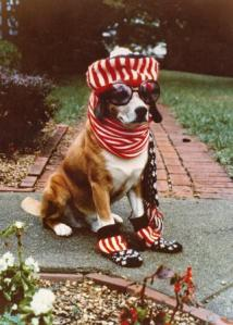 "Bingo the Bicentennial Dog was dressed to celebrate on July 4, 1976.  This photograph was entered in the ""Spirit of Ohio"" photography contest sponosored by the Ohio American Revolution Bicentennial Advisory Commission."