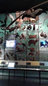 The Hall of Biodiversity at the American Museum of Natural History exhibits many types of natural history specimens.